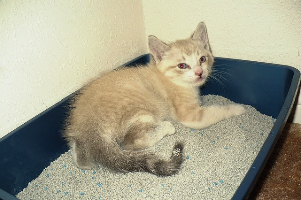 caixa-de-areia-gatos-3
