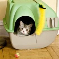 caixa de areia gatos