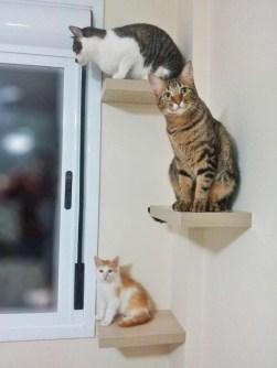 historias-de-adocao-gatos