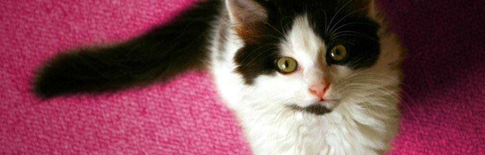 Riscos e prevenção do câncer de mama em gatos