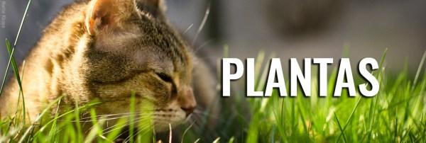 plantas-lista-toxicidade-perigosas-venenosas-gatos
