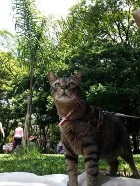 lispector-historias-de-adocao-gatos
