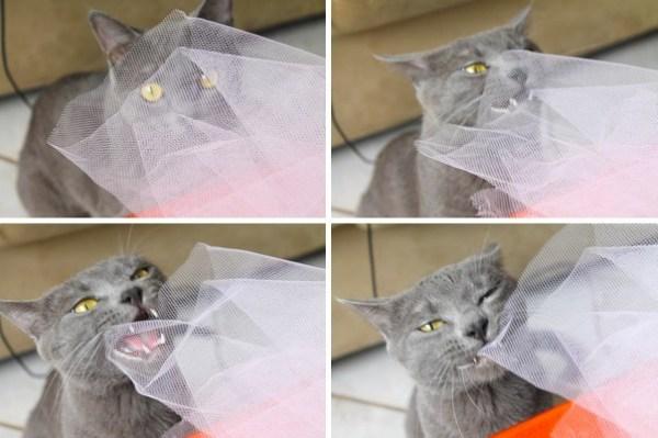Lord historias de adocao gatos