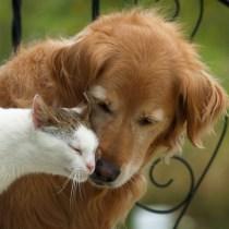 gato-cachorro-conviverem-numa-boa