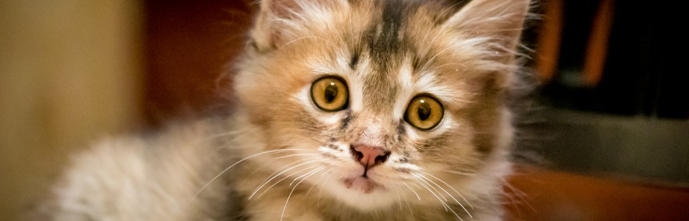 Pessoas, comida, brinquedinhos ou cheiros: o que os gatos preferem?