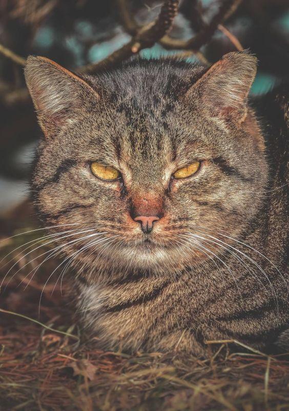 gatos rua fotografia gabriel khiterer (11)