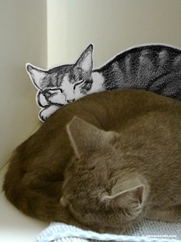 GA.CatTown.Napping