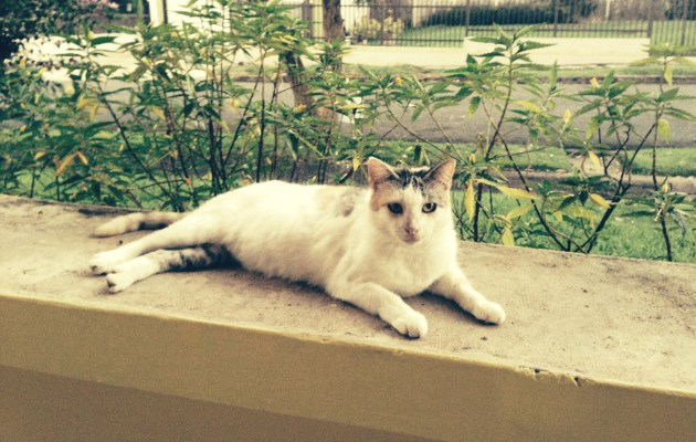 Sometimes a feral cat decides to change her life and be adopted. Photo: Glorivette Anibarro