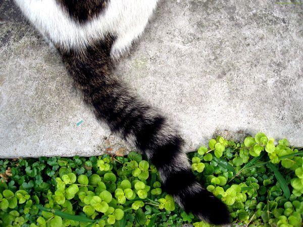 La cola de los gatos