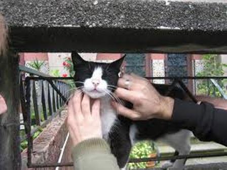 Fidelidad de los gatos hacia los amos
