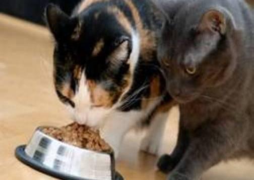 Instinto de supervivencia en los gatos