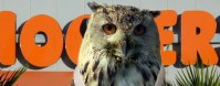 HOOTERS--33655