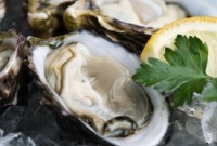 new_orleans_oyster