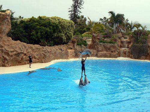 Loro Parque Tenerife Spain