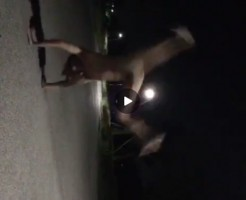 【Vine動画】ペニスよりアナル気にしろよ!w夜の公園でスリ筋男子が側転をした結果w