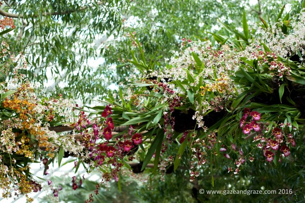 Overhanging orchids - definitely looks like a took a lot of time to put these displays together