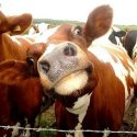 MOOOO!!! Groot Lands Livestock Ship Design Order