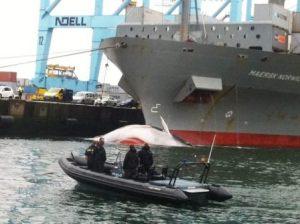 maersk norwich whale strike
