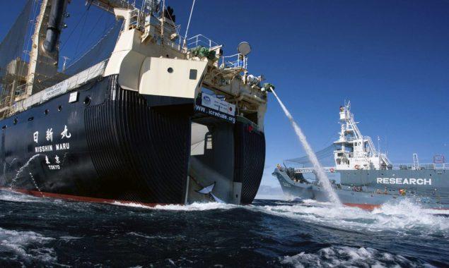 Nisshin Maru sea shepherd whaling