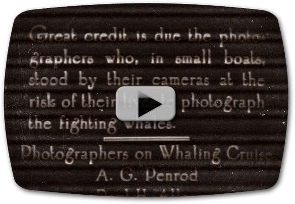 Whaling Voyage