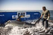 OCEARCH Catches and Releases Nearly Half Dozen Great Whites Off Cape Cod
