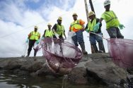Matson to Pay for Honolulu Molasses Spill Response