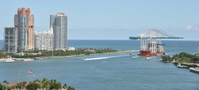 Miami Cranes 1