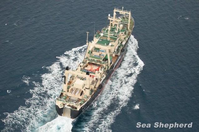 news-140105-1-3-Nisshin-Maru-0014179-800w