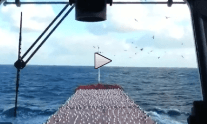 VIDEO: Bulker Crew Trolls Seagulls