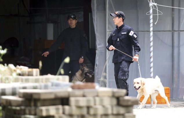 A South Korean policeman stands guard with his dog (L) as another patrols with a search dog, at Christian Evangelical Baptists of Korea premises in Anseong June 11, 2014. REUTERS/Shin Joon-hee/Yonhap