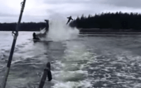 Video: Killer Whale Launches Sea Lion 20 Feet Into The Air