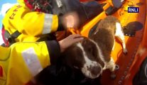 Video: RNLI Crew Rescues Missing Dog From England's Tallest Cliffs
