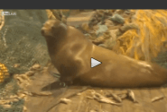 Fishermen Catch Pissed Off Sea Lion [VIDEO]