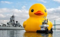SPOTD: World's Largest Rubber Duck