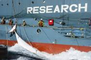 Japan-Led Group Blocks Proposal for South Atlantic Whale Sanctuary