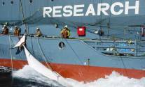 Sea Shepherd Denied by US Supreme Court And Ordered To Pay Whalers Millions