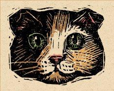 castawaycat