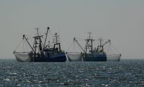 South Africa Arrests Chinese Squid Poaching Ships