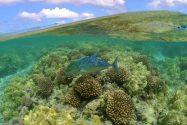 Obama Creates World's Largest Marine Reserve Off Hawaii