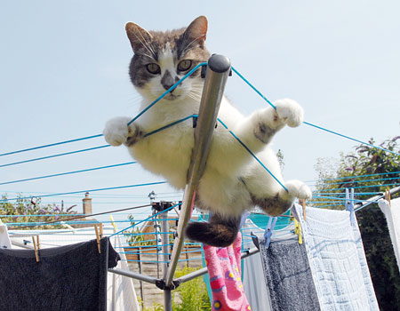 Cat Clothesline