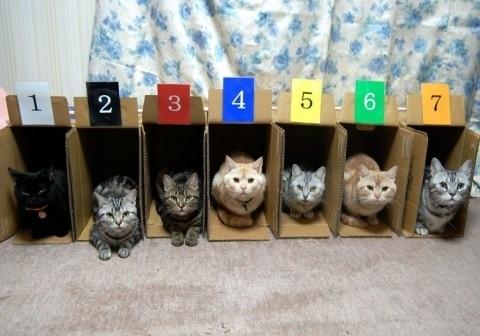Cats box