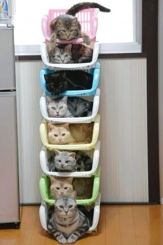 Cats container