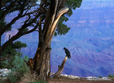 08-geardiary-grand-canyon-007
