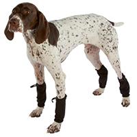 dog shoe4