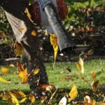 Man vs Nature: How to Deal with Those Pesky Leaves