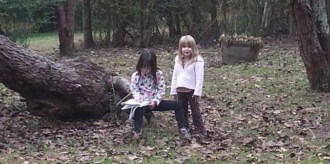 woods_644x320