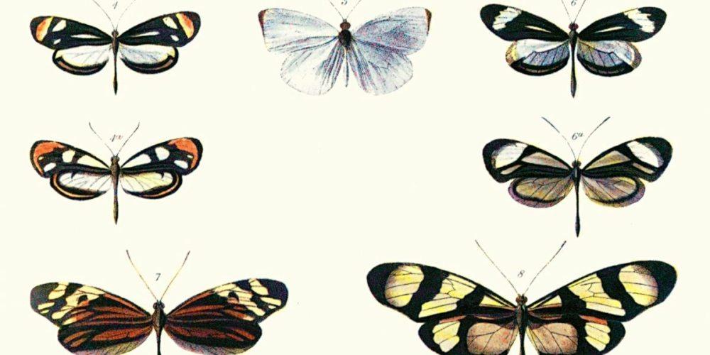 naturalistfeatured