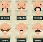 La verdad peluda acerca de los bigotes