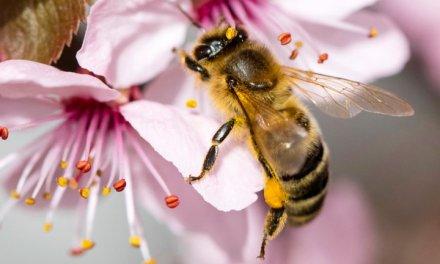 AUDI colabora en un proyecto sin ruedas: La primer colmena de abejas de alta tecnología en el mundo