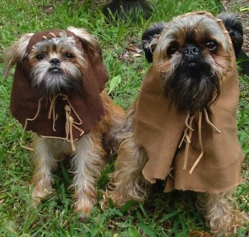 Ewok Dogs from puppyintraining.com